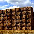 Haystacks near Carlton