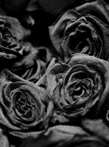Deadroses