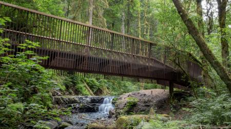ForestParkBridges_WebMedia(72)